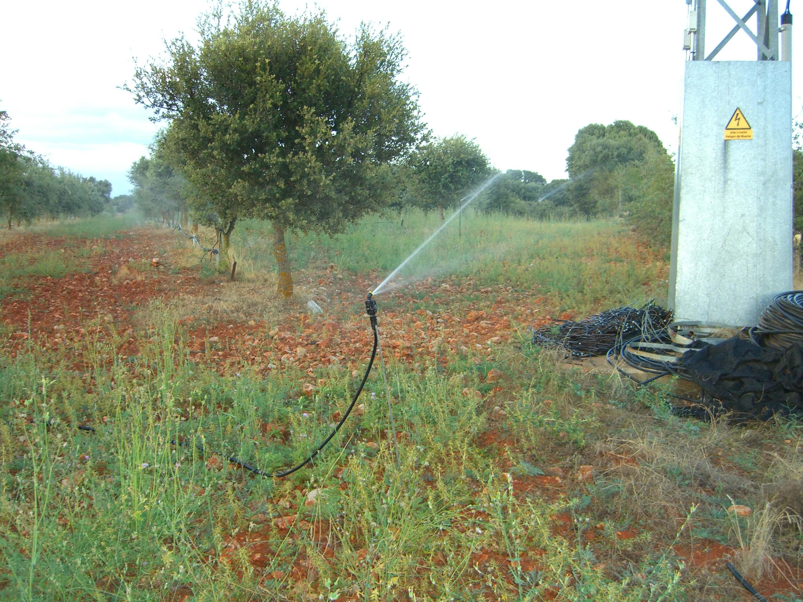 Sistema de riego para tu plantaci n trufera encitruf for Factores para seleccionar el terreno para el vivero